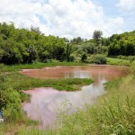 Seymour Pond Nature Reserve, Bermuda August 6 2012 (3)