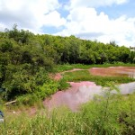Seymour Pond Nature Reserve, Bermuda August 6 2012 (4)