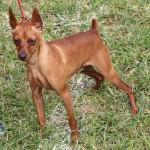 Bermuda Kennel Club Dog Show, October 20 2012-1-10