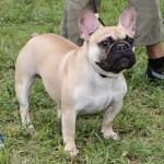 Bermuda Kennel Club Dog Show, October 20 2012-1-13