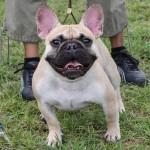 Bermuda Kennel Club Dog Show, October 20 2012-1-14