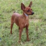 Bermuda Kennel Club Dog Show, October 20 2012-1-15