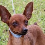 Bermuda Kennel Club Dog Show, October 20 2012-1-16