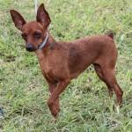 Bermuda Kennel Club Dog Show, October 20 2012-1-18