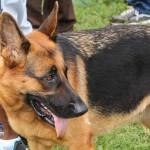 Bermuda Kennel Club Dog Show, October 20 2012-1-20