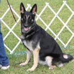 Bermuda Kennel Club Dog Show, October 20 2012-1-21