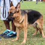 Bermuda Kennel Club Dog Show, October 20 2012-1-32