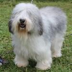 Bermuda Kennel Club Dog Show, October 20 2012-1-34