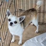 Bermuda Kennel Club Dog Show, October 20 2012-1-36