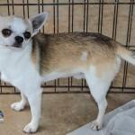 Bermuda Kennel Club Dog Show, October 20 2012-1-40