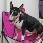 Bermuda Kennel Club Dog Show, October 20 2012-1-41