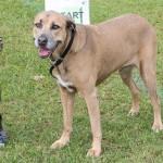 Bermuda Kennel Club Dog Show, October 20 2012-1-44