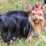 Bermuda Kennel Club Dog Show, October 20 2012-1-5