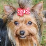 Bermuda Kennel Club Dog Show, October 20 2012-1-6