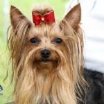 Bermuda Kennel Club Dog Show, October 20 2012-1-7