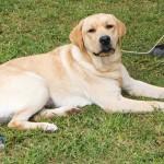 Bermuda Kennel Club Dog Show, October 20 2012-1