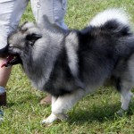 Bermuda Kennel Club Dog Show, October 20 2012 (12)
