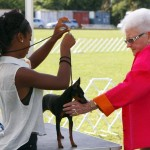 Bermuda Kennel Club Dog Show, October 20 2012 (32)