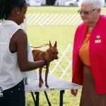 Bermuda Kennel Club Dog Show, October 20 2012 (38)