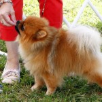 Bermuda Kennel Club Dog Show, October 20 2012 (44)