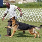 Bermuda Kennel Club Dog Show, October 20 2012 (52)