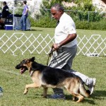Bermuda Kennel Club Dog Show, October 20 2012 (56)