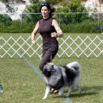 Bermuda Kennel Club Dog Show, October 20 2012 (9)
