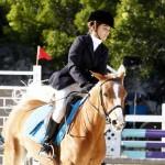Inwood Hunter Jumper Show Horses Bermuda Equestrian, November 25 2012 (10)