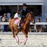 Inwood Hunter Jumper Show Horses Bermuda Equestrian, November 25 2012 (13)
