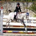 Inwood Hunter Jumper Show Horses Bermuda Equestrian, November 25 2012 (24)