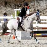 Inwood Hunter Jumper Show Horses Bermuda Equestrian, November 25 2012 (28)