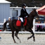 Inwood Hunter Jumper Show Horses Bermuda Equestrian, November 25 2012 (37)