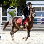 Inwood Hunter Jumper Show Horses Bermuda Equestrian, November 25 2012 (46)