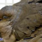 Poisoned Birds Bermuda, February 18 2013 (4)