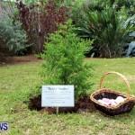 Earth Day Tree Planting, Bermuda April 22 2013 (9)