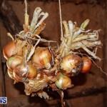 Bermuda Onion Day April 1 2013-14