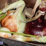 Bermuda Onion Day April 1 2013-18
