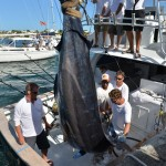 overproof marlin bermuda 2013 (3)
