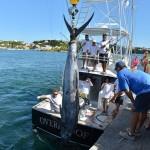 overproof marlin bermuda 2013 (6)