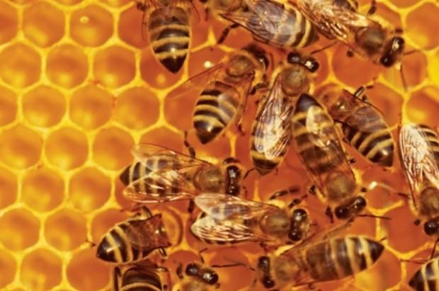 bees generic