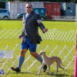 Bermuda Kennel Club BKC Dog Show, October 19, 2013-10
