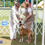 Bermuda Kennel Club BKC Dog Show, October 19, 2013-14