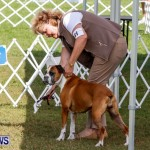 Bermuda Kennel Club BKC Dog Show, October 19, 2013-15