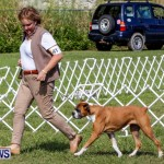 Bermuda Kennel Club BKC Dog Show, October 19, 2013-16