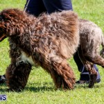 Bermuda Kennel Club BKC Dog Show, October 19, 2013-24