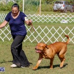 Bermuda Kennel Club BKC Dog Show, October 19, 2013-32