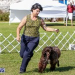 Bermuda Kennel Club BKC Dog Show, October 19, 2013-39