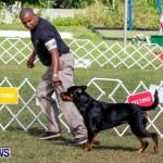 Bermuda Kennel Club BKC Dog Show, October 19, 2013-42
