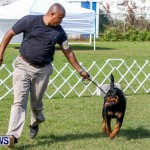 Bermuda Kennel Club BKC Dog Show, October 19, 2013-44