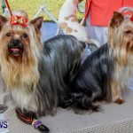 Bermuda Kennel Club BKC Dog Show, October 19, 2013-51